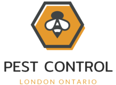 Pest Control London Ontario